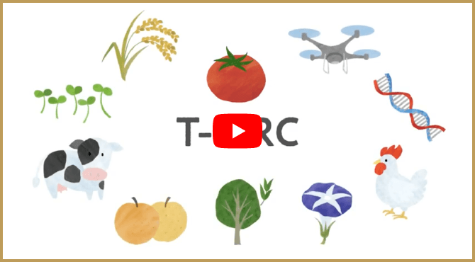 Tsukuba-Plant Innovation Research Center(T-PIRC) PR movie|T-PIRC