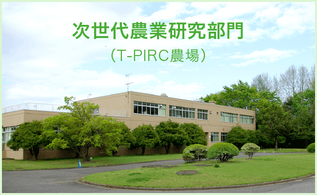 次世代農業研究部門|筑波大学つくば機能植物イノベーション研究センター(T-PIRC)