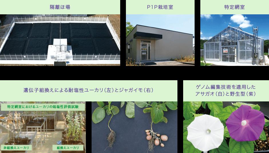 遺伝子実験センター 筑波大学つくば機能植物イノベーション研究センター(T-PIRC)
